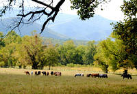 Smoky Mountain National Park, TN - Horses