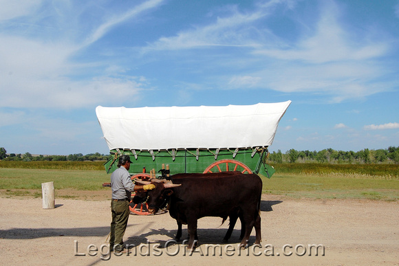 Bent's Fort, CO - Wagon & Oxen