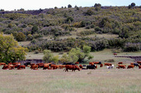 Folsom, NM - Cattle Drive