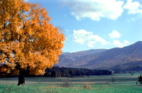 Smoky Mountain National Park, TN - Cade's Cove