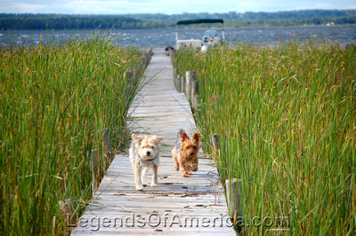 Rapid River - Vaga Bond Resort - Dogs
