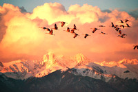 Great Sand Dunes National Park, CO - Sandhill Cranes