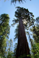 Calaveres Big Trees State Park, CA