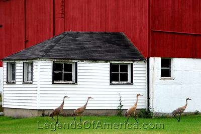 Waukesha County, WI - Sandhill Cranes