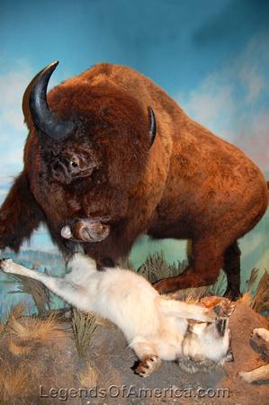 Abilene, TX - Abilene, TX - Frontier Texas Museum Buffalo