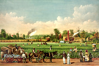 Cotton plantation on the Mississippi River