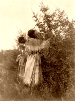 Mandan Berry Gatherers, 1908
