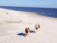 Bay St. Louis, MS - Dogs on the Beach