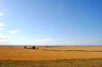 Southwest North Dakota Wheat Fields