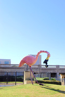 Abilene, TX - Giant Flamingo