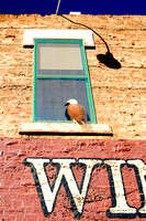 Winslow, AZ - Standin' Corner - Window - 2