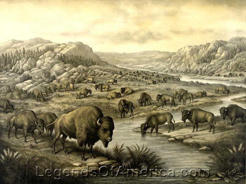 Legends Of America Photo Prints Buffalo Bison