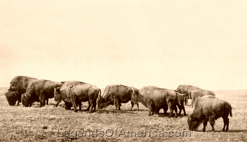 Legends Of America Photo Prints Buffalo Bison