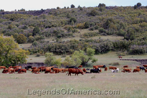 Dry Cimarron Scenic Byway, NM - Cattle Drive