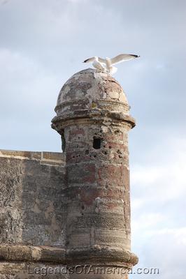 St. Augustine, FL - Castillo de San Marcos Bastion Birds