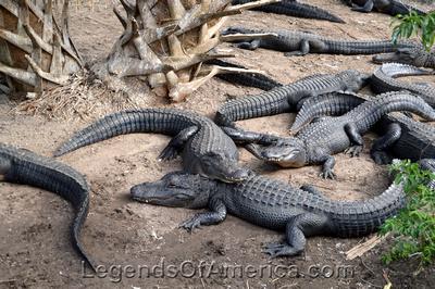 St. Augustine, FL - Alligator Farm