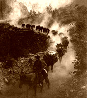 Burro Train Ouray, CO, 1906