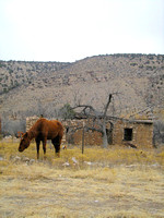 Lincoln, NM - Horse