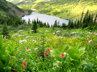 Rocky Mountain Nat'l Park - Wild Flowers