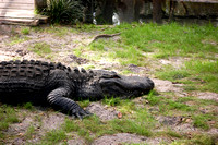 St. Augustine, FL - Alligator Farm - 3