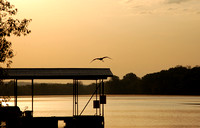 Lake of the Ozarks - May Morning Heron