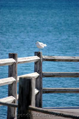 St Ignace, MI - Seagull