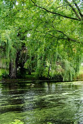 Rome, WI (Sullivan) - Swamp/River