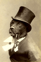 Dog in Top Hat, 1894